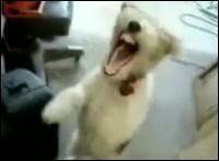 デスメタルな子犬 ほんとにDeath Metalってるよw