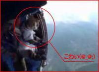 スカイダイビングでネコ虐待!これは酷い!ぬこ様とタンデムジャンプ