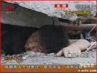 四川大地震 73時間瓦礫に埋もれている男性に生インタビュー