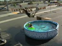プールを飛び越えてダンクを決める黒人が凄すぎるんだけど・・・。