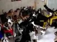 なんと猫130匹を家で飼っているおばさんの映像 家の中やべぇw