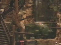店舗に設置された巨大な水槽のディスプレイに飛び込むイタズラ